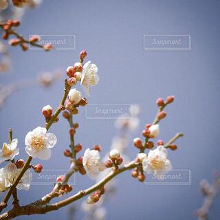 花のクローズアップの写真・画像素材[4379290]