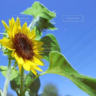花のクローズアップの写真・画像素材[4661517]