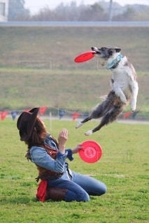 フリスビーを捕まえるために空中に飛び込む犬の写真・画像素材[2708031]
