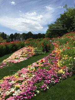 花,花畑,ピンク,草木,ガーデン