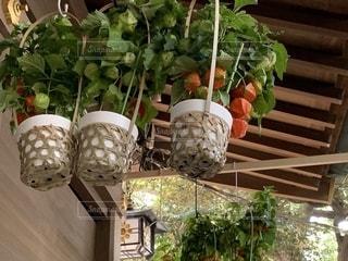 軒下の綺麗なほおづきの籠の写真・画像素材[2484757]