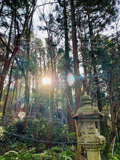 香取神宮の境内。木々の間から差し込む朝日と、石燈籠の写真・画像素材[2868066]