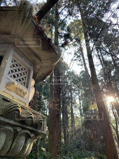 香取神宮の石燈籠と木々の間から差し込む光。の写真・画像素材[2868067]