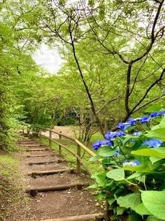紫陽花が綺麗な清水公園の写真・画像素材[3442487]