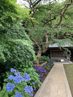 清水公園内の紫陽花が美しい静かなお寺の写真・画像素材[3442486]