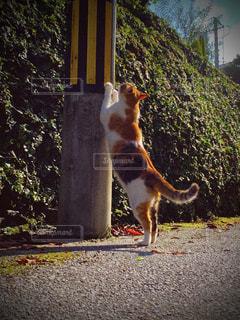 猫,日常,レトロ,電柱,路地,野良猫,フィルム,フィルム写真,爪とぎ,フィルムフォト