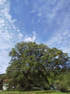 空,屋外,景色,樹木,新緑,フィルム,草木,日中,フィルム写真,クラウド,フィルムフォト