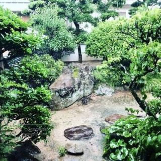 庭の茂みの群りの写真・画像素材[2681417]