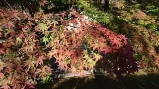 庭にピンクの花を咲かせた木の写真・画像素材[2514108]