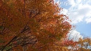 木のクローズアップの写真・画像素材[2514106]