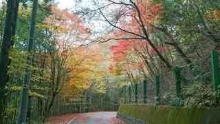 公園の木の写真・画像素材[2514109]