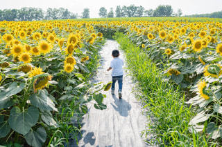 黄色い花を見た男の写真・画像素材[2513537]