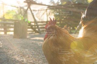 動物の写真・画像素材[2658636]