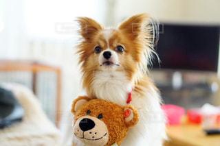 犬と一緒にぬいぐるみのクローズアップの写真・画像素材[2700359]