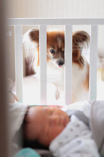 ベッドに座っている犬の写真・画像素材[2700386]