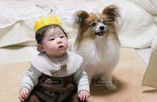 赤ん坊を抱いている小さな茶色と白い犬の写真・画像素材[2700479]