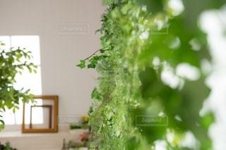 花をクローズアップするの写真・画像素材[2732370]