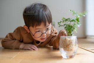 寝転んで観葉植物をさわっている男の子の写真・画像素材[2768902]