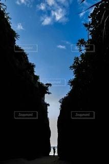 暗い曇り空の木の写真・画像素材[2792154]