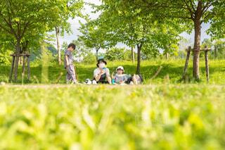 草の中に立っている人のカップルの写真・画像素材[4597404]