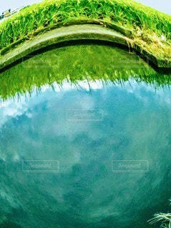 魚の目線から空を見上げての写真・画像素材[2439507]