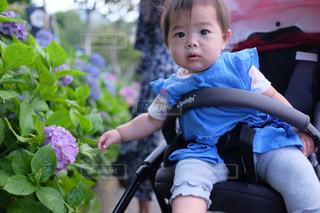 紫陽花と赤ちゃんの写真・画像素材[2237775]