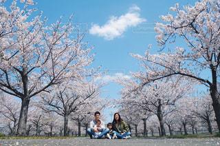 桜の下での写真・画像素材[3085136]