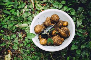 食べ物,野菜,食品,なす,畑,食材,フレッシュ,ベジタブル,じゃがいも