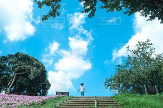 青空の下での写真・画像素材[4501682]