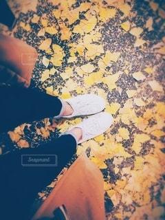 落ち葉の写真・画像素材[2439910]