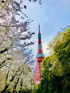東京タワーと桜の写真・画像素材[4299073]