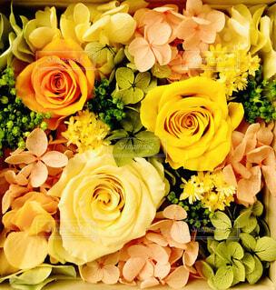 花のクローズアップの写真・画像素材[4313815]