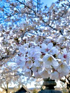 花のクローズアップの写真・画像素材[3050920]