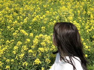 自然,風景,花,絶景,黄色,菜の花,景色,フィルム,コーデ,ootd,フィルム写真,フィルムフォト,フォトコンテスト