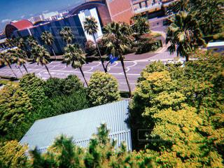 自然,風景,空,木,木々,樹木,ヤシの木,フィルム,天気,草木,眺め,フィルム写真,空模様,写真素材,フィルムフォト