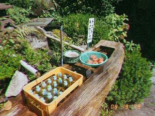 自然,夏,水,トマト,野菜,フィルム,野外,懐かしい,ラムネ,湧き水,フィルム写真,きゅうり,フィルムフォト