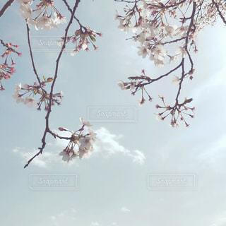 木の枝につるされた鳥の写真・画像素材[2433722]