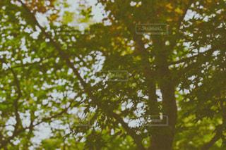 木のクローズアップの写真・画像素材[2433762]