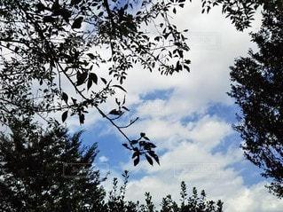 白い雲と木の葉の写真・画像素材[2435192]
