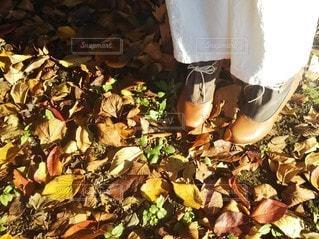 秋の散歩道の写真・画像素材[2726734]