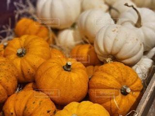 木箱に入ったかぼちゃの写真・画像素材[4921468]