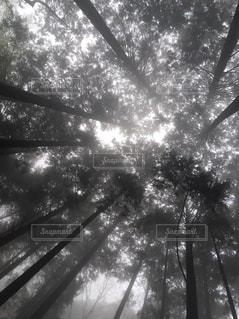 自然,幻想的,霧,山,登山,フィルム,フィルム写真,フィルムフォト