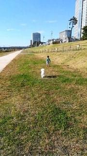 河川敷で犬と子どもの散歩の写真・画像素材[2414157]