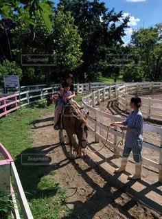 青空と乗馬体験の写真・画像素材[2414179]