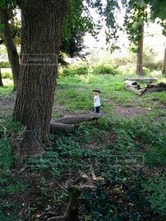 木々の中に立っている子どもの写真・画像素材[2414178]