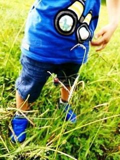 小さな男の子に見つかったてんとう虫の写真・画像素材[2439329]