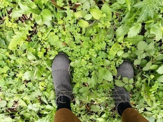 草と露とキラキラブーツの写真・画像素材[2762408]