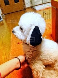 犬と遊ぶの写真・画像素材[2809759]