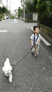 颯爽と散歩の写真・画像素材[3435363]