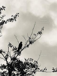 自然,空,鳥,木,晴天,ナチュラル,フィルム,フィルム写真,フィルムフォト